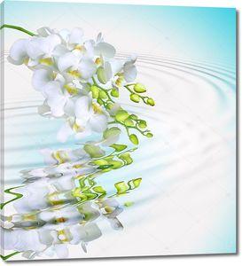 Красивая белая орхидея над водной рябью