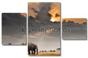 Африканский закат с слонов