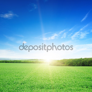 Восходящее солнце на поле