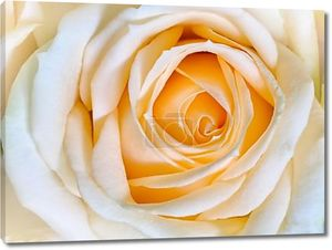 сладкий цвета розы в мягкие цвета