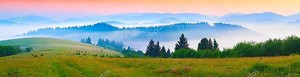 Morning in the foggy Carpathian mountains