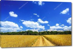 Пейзаж с зерновым полем и голубым небом