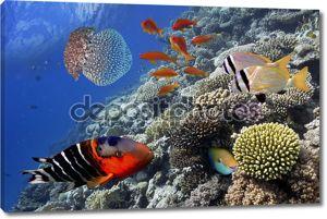 тропические рыбы кораллового рифа в Красном море