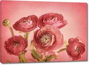 Красивые цветы на красном фоне