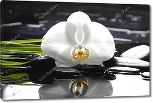 Спа-натюрморт с белой орхидеей на гальке