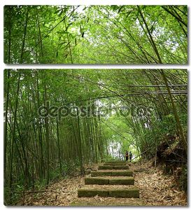пышные бамбуковый лес