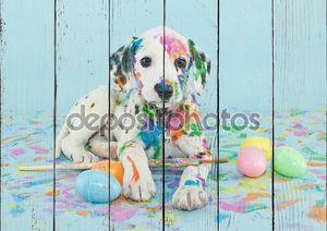 Easter Dalmatain Puppy