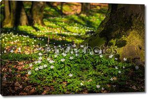 Волшебный лес с подснежниками
