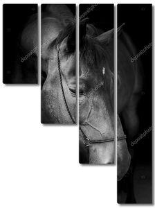 черный конь в halter и темная грива и белое пламя на голове на черном фоне