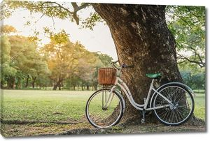белый велосипедов в зеленом парке