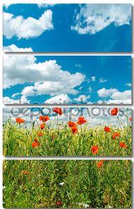 Зеленое поле с красными маками и пасмурное небо