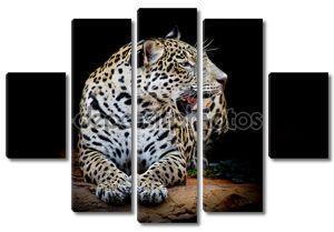 Портрет ягуара на черном фоне