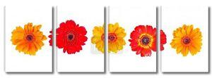 оранжевые, красные и Желтые герберы ромашки
