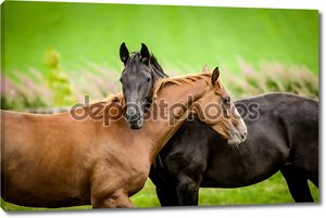 Две лошади, охватывающей в дружбе