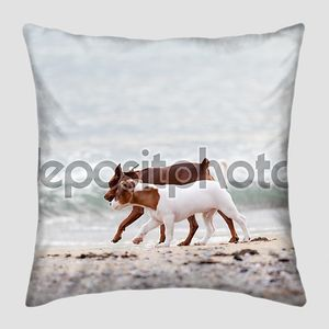 Собаки, играя на пляже
