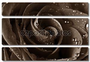 Природные розы фон