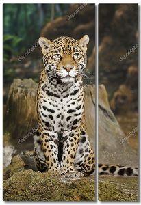 Ягуар позирует на камеру