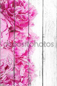 Розовые пионы граница