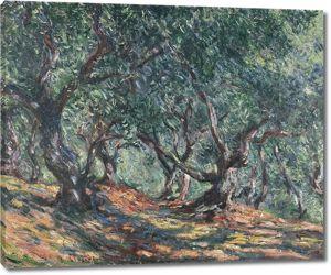 Моне Клод. Оливковые деревья в Бордигере, 1884