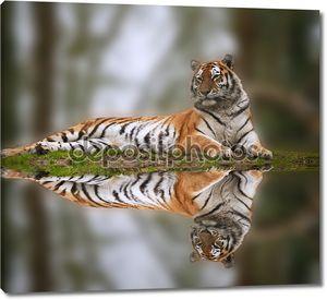 Красивый тигр, лежа на травянистых банка отражения в воде