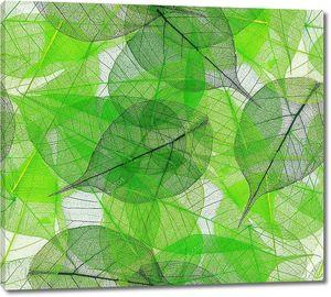 Зеленые листья прозрачные