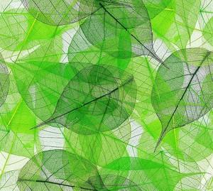 Зеленые листья бесшовный фон
