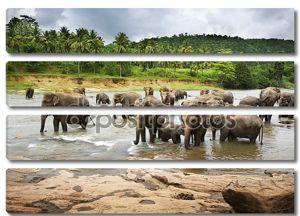 Азиатские слоны