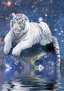 Белый тигр размещения на земле