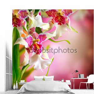 Orchid цветы дизайн