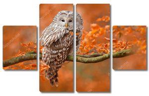 Уральская сова на оранжевом дубе