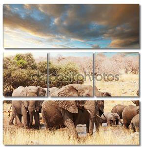 Слоны в дикой прирорде