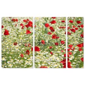 Весна луг с маком и ромашка цветки