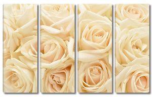 Фон с красивыми белыми розами