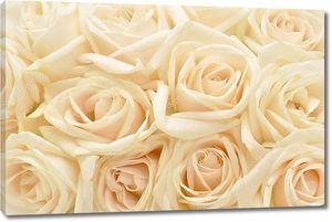Красивые белые розы фон