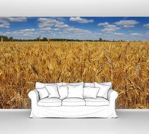 Летнее пшеничное поле