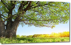 Ветвистое дерево на опушке