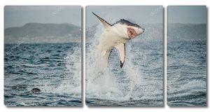 Охота на белую акулу