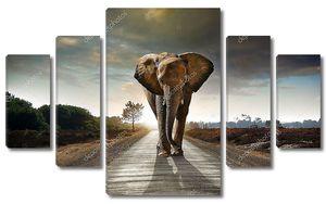 Single Walking Elephant