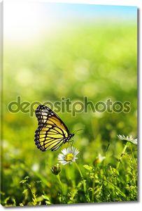 бабочка в зелени