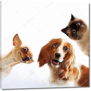 Три домашних друга