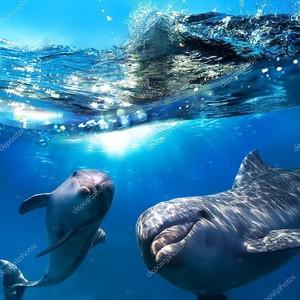 Веселые дельфины