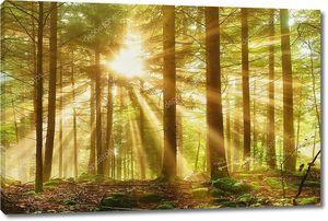 Мистический лес с утренним лучом солнца