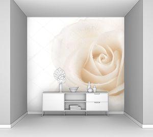 Красивые мягкие лепестки розы