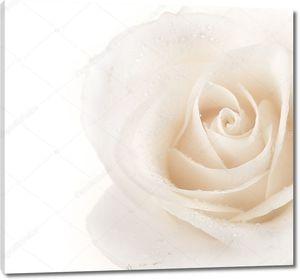 Красивые мягкие границы Роуз