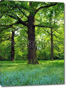 Волшебные деревья дуба