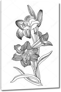 вручите оттянутые цветы лилии