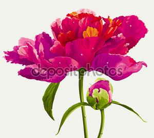 Красный пион цветок