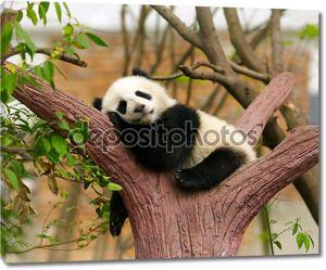 Спящая панда ребенка