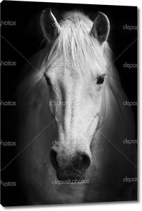 Портрет белой лошади в черно-белом.