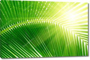 Листья пальм и утренний свет